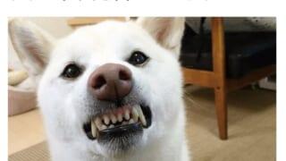 【画像】土砂降りの中注射を打たれた犬、ニッコニコwwwww