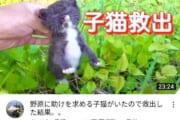 【悲報】保護猫YouTuberタイピーさん、収益復活へ・・・